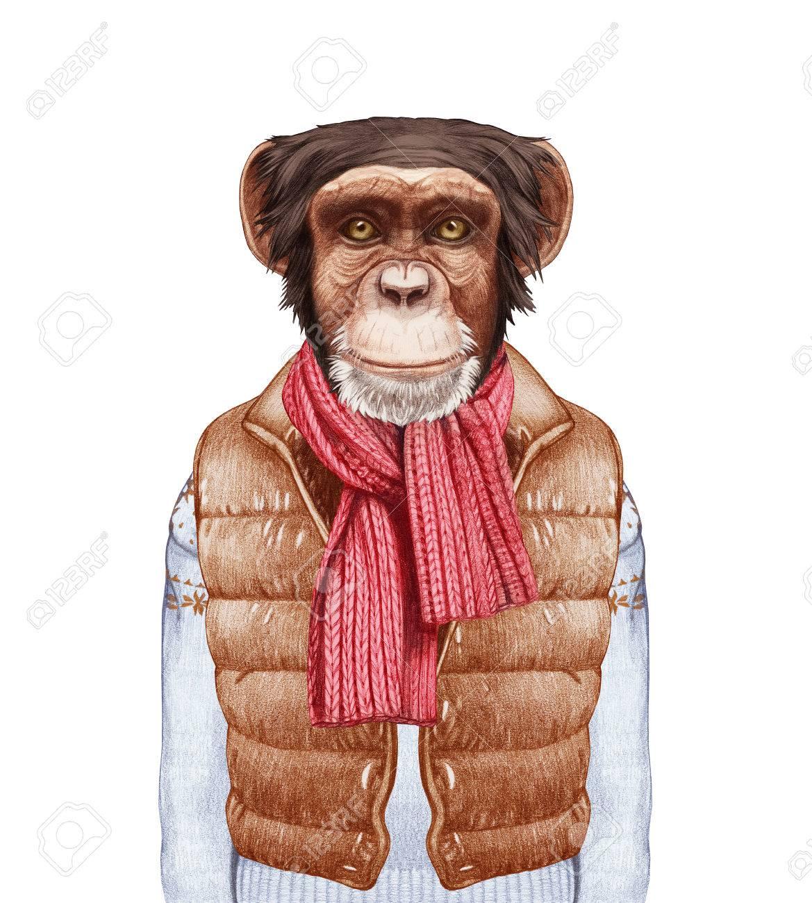 人間として動物。ベスト、セーター、マフラー下の猿の肖像画。手描き