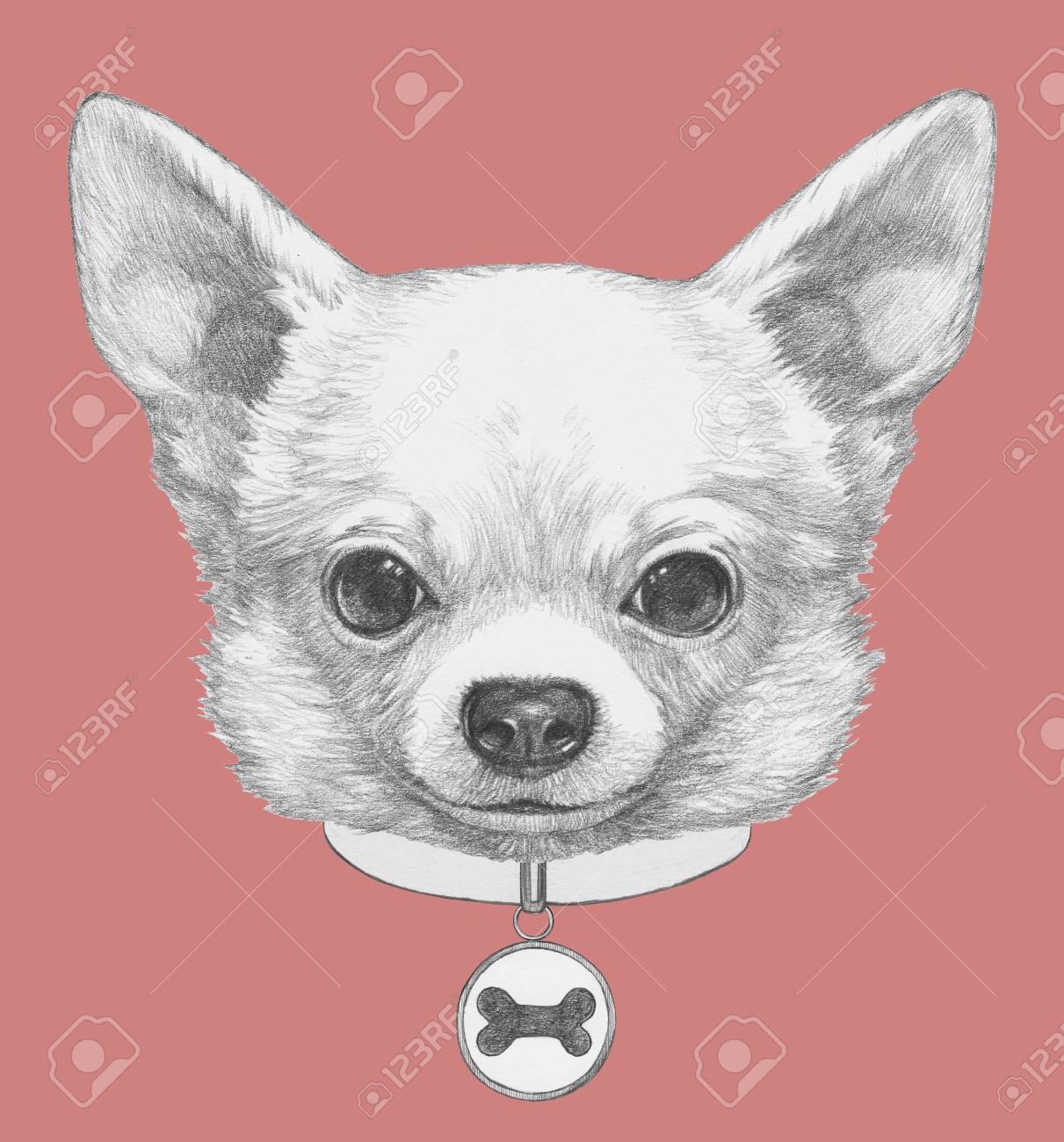 犬の首輪とチワワの肖像画手描きのイラスト の写真素材画像素材