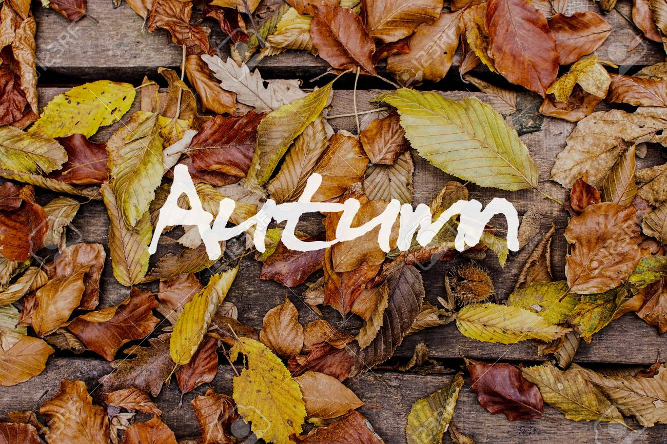 木製の背景に紅葉 秋のコンセプトの壁紙 の写真素材 画像素材