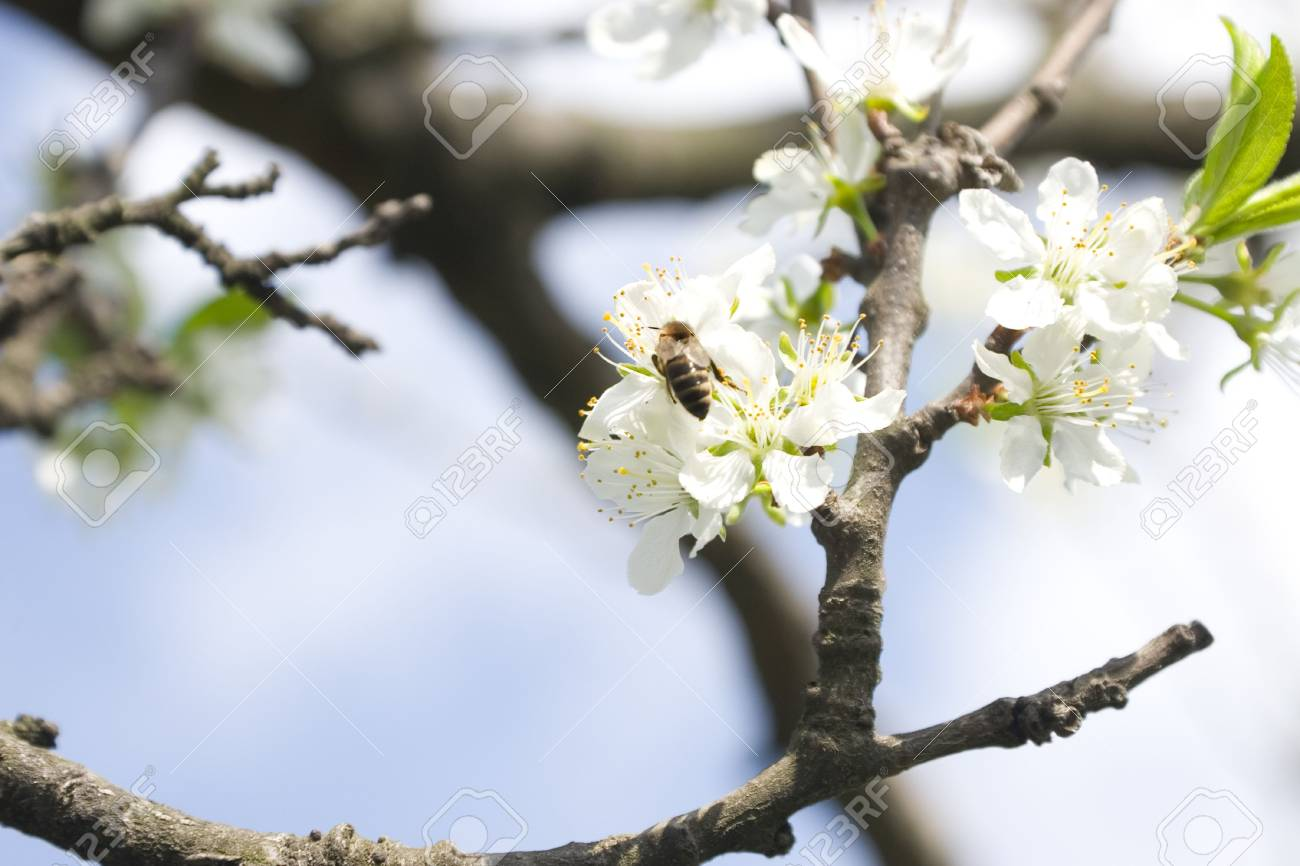 detail of a flower branch in spring time Stock Photo - 6965032