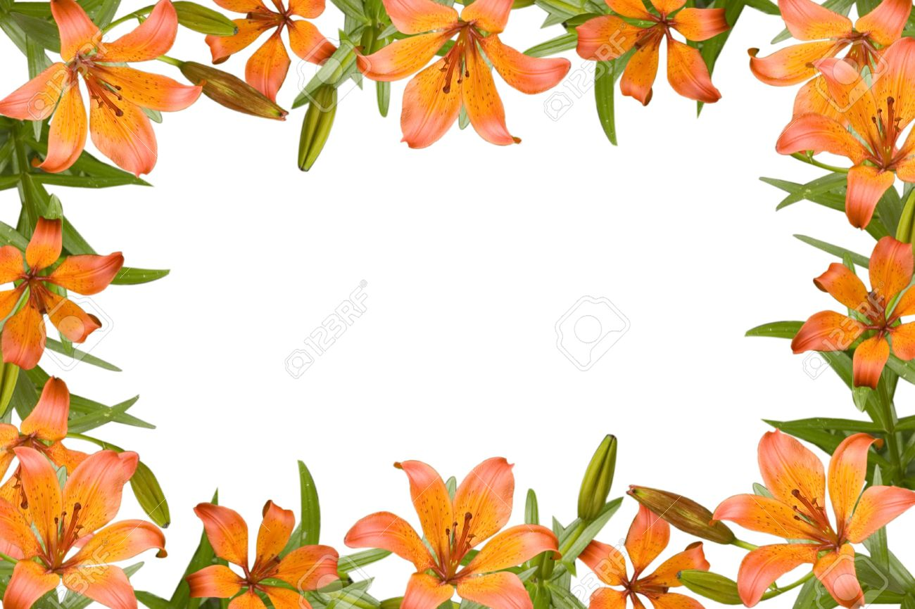 Orange Lily, Flower Frame With Green Leaves Stock Photo, Picture And ...
