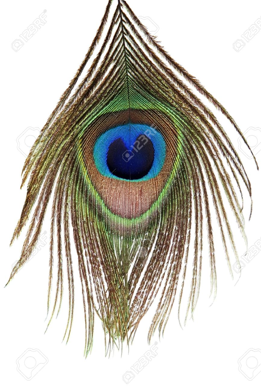 Detail of peacock feather eye on white background Stock Photo - 9724980