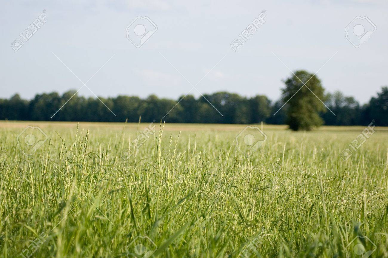 summer field with green grass and blue sky Stock Photo - 371952