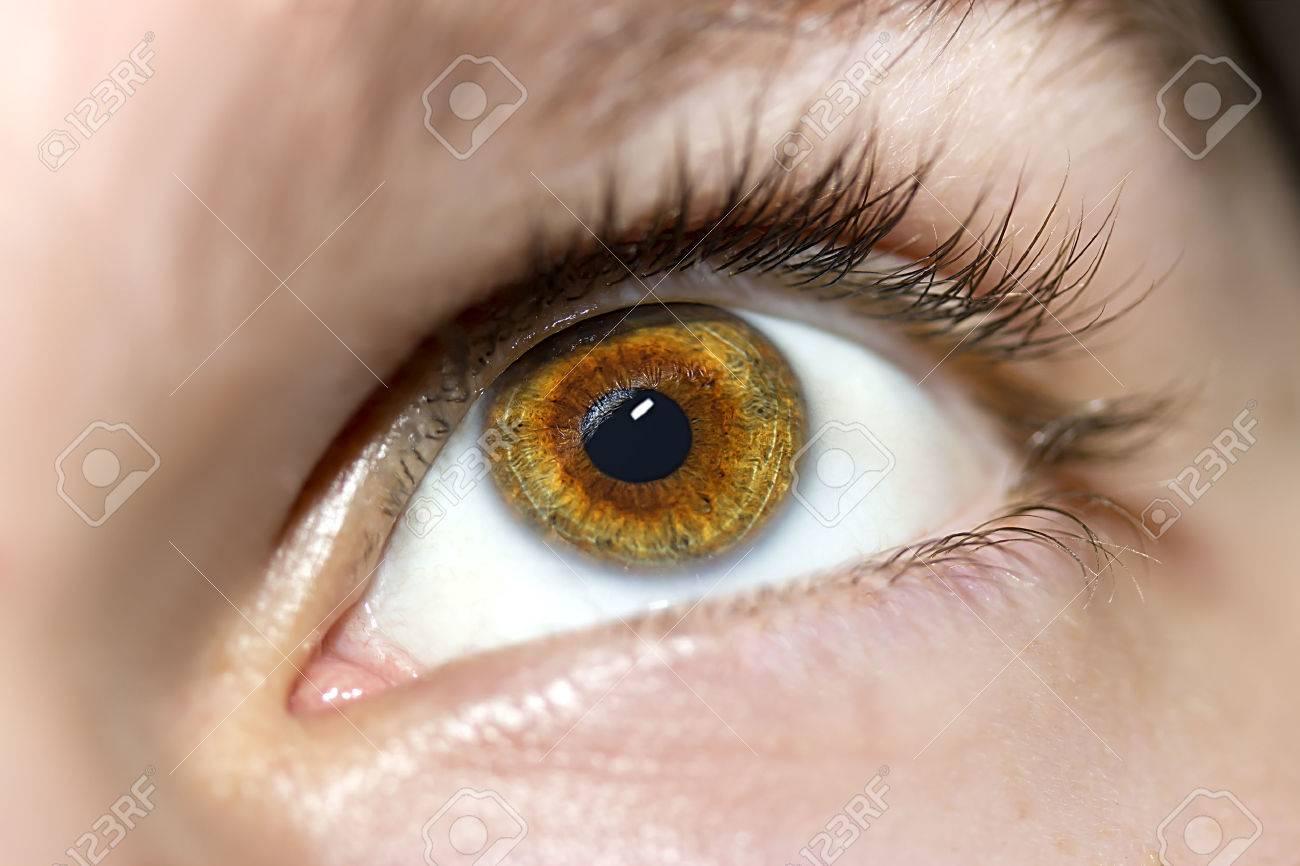 Image of man's brown eye close up. - 45503921