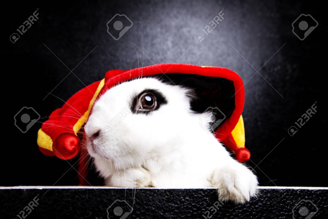 Stock photo white rabbit with a joker cap on a black background