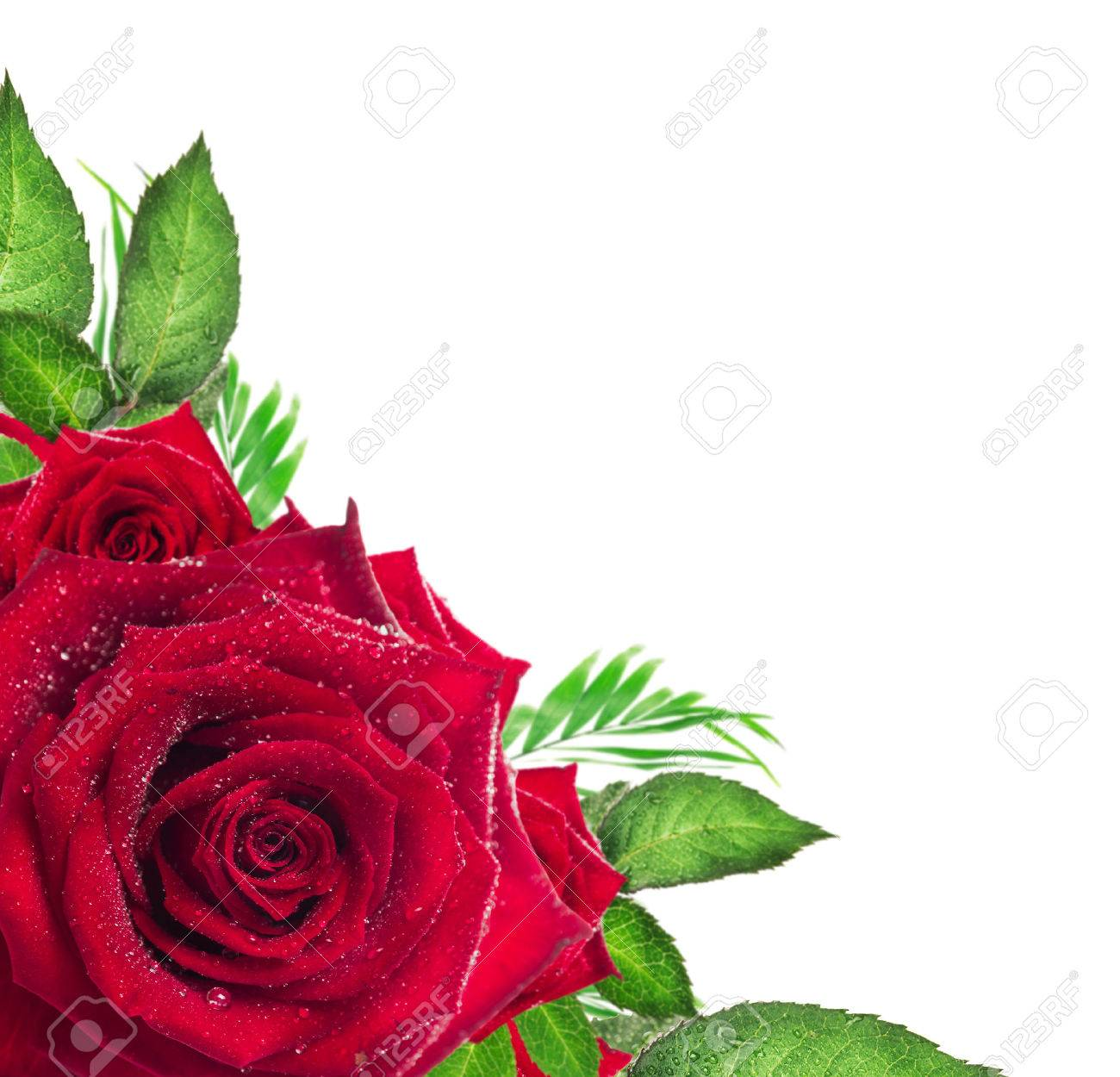 Red Rose Flower With Green Leaves On White Background Corner Border Stock Photo