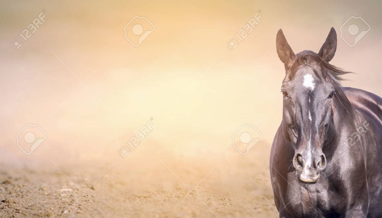 Free banner images for website - Horse On Sand Background Banner For Website Stock Photo 37023874