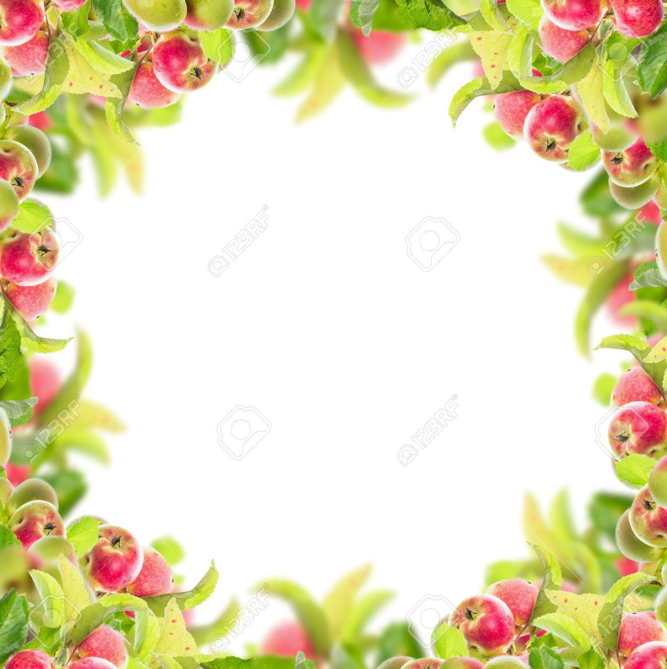 Apple Branch With Apples And Leaves Square Rectangular Frame