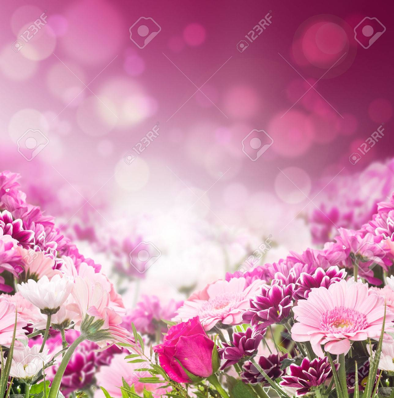 flower border stock photos royalty free flower border images and