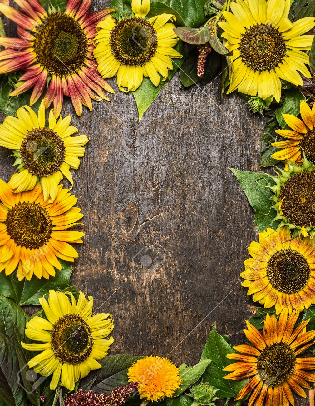 Colorful Sunflowers Frame On Rustic Wooden Background Top View Stock Photo
