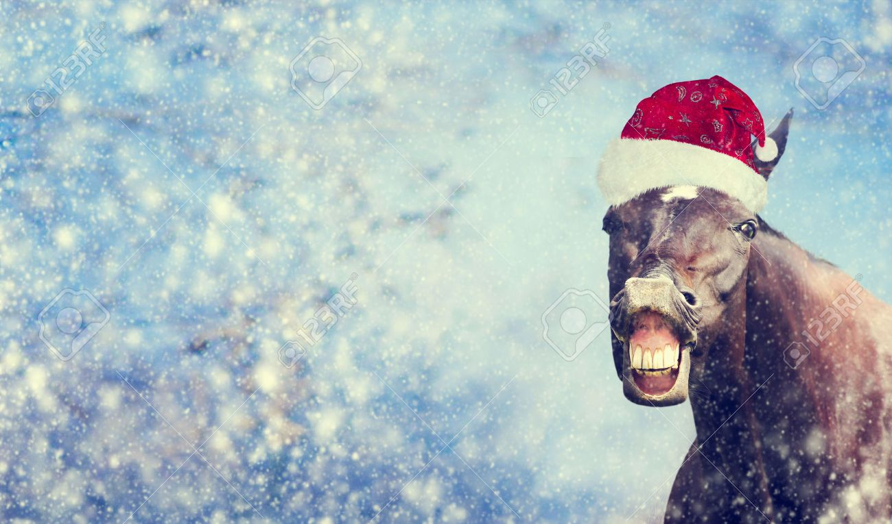 funny christmas horse with santa hat smiling and looking into