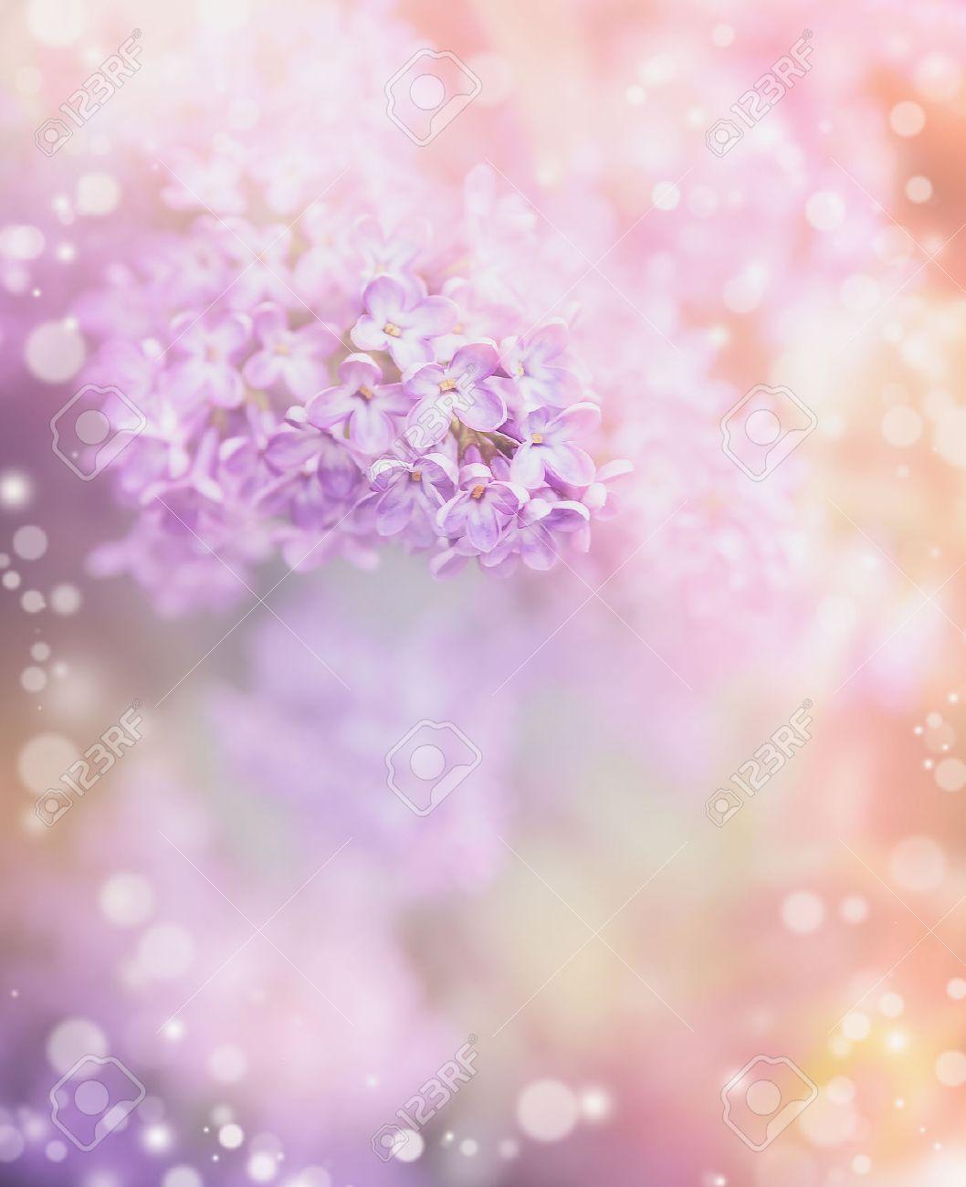 Flores De Color Lila Sobre Fondo Hermoso Bokeh Frontera Floral En - Color-lila-pastel