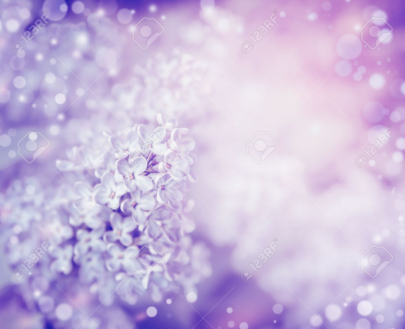 Beautiful flowers of lilac , close up. Lilac blooming background. Light pastel floral border - 54220044