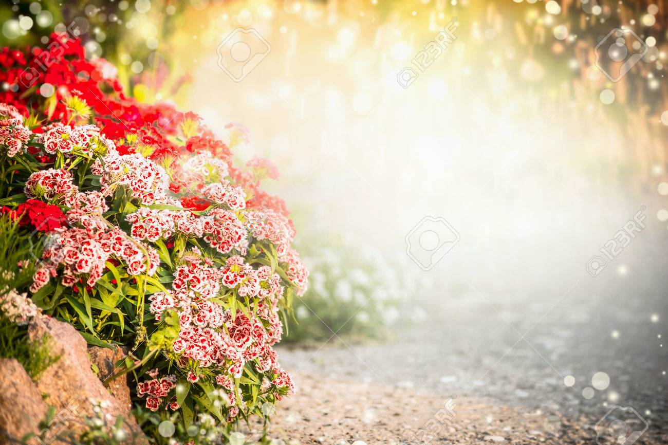 beautiful flowers garden background turkish carnation flowers stock photo picture and royalty free image image 54220046 beautiful flowers garden background turkish carnation flowers