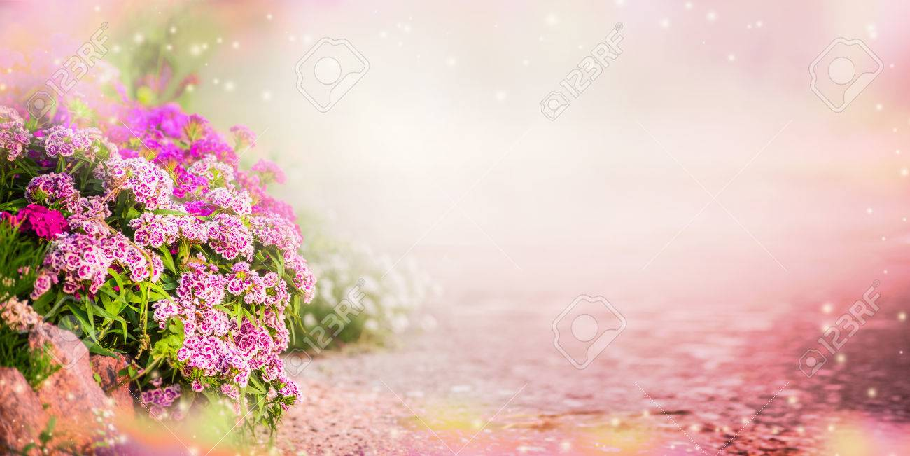 Garden background with pink garden flowers, banner. Floral Outdoor..