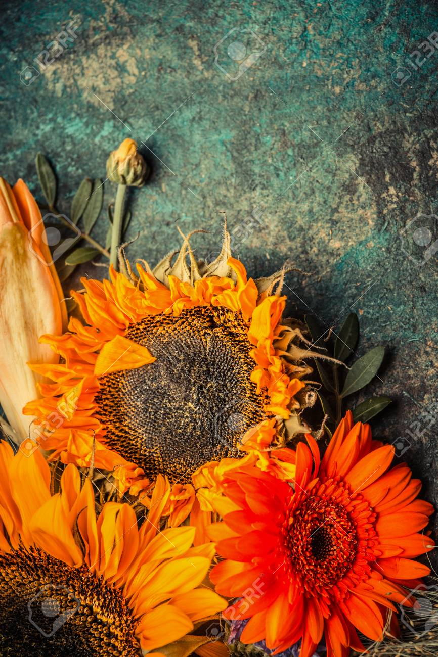 Autumn Flowers Bunch With Sunflowers On Dark Rustic Background Top View Border Stock Photo