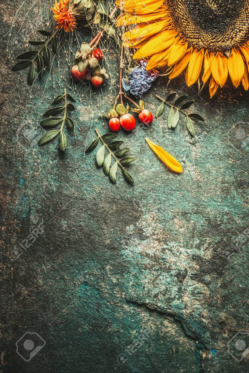 Autumn Leaves And Sunflower On Dark Rustic Background Top View Border Stock Photo
