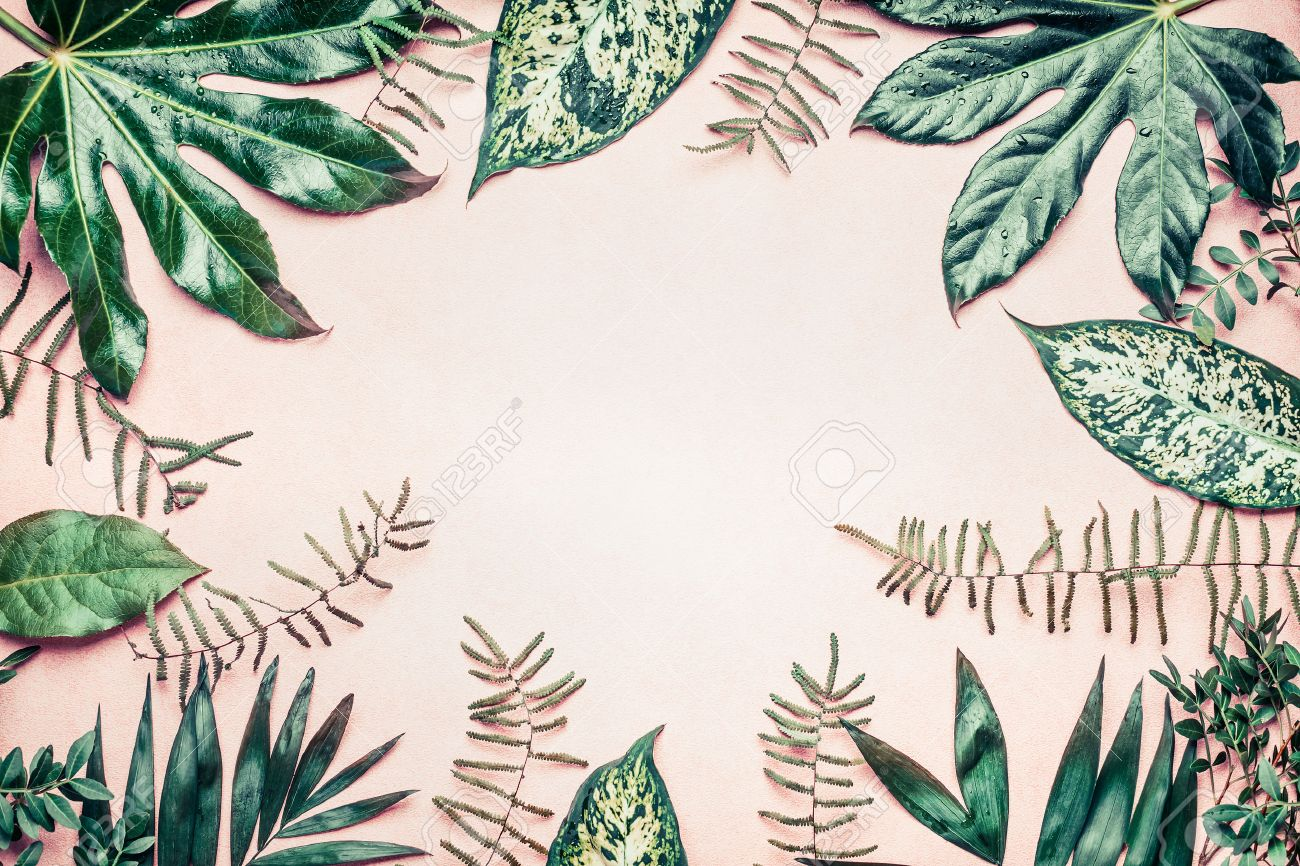 creative nature frame made of tropical palm and fern leaves stock