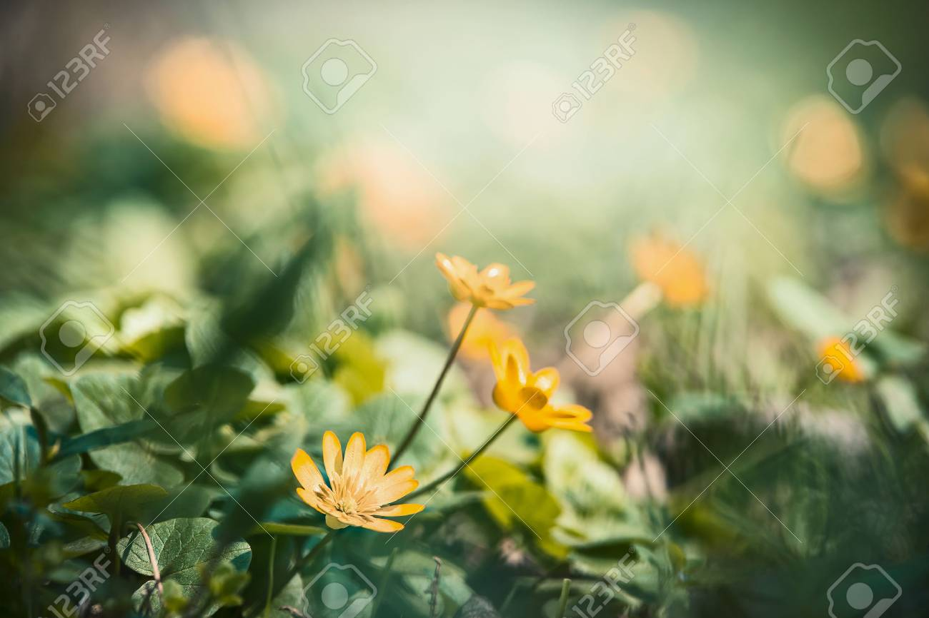 Outdoor Nature Background With Pretty Yellow Flowers Floral Stock