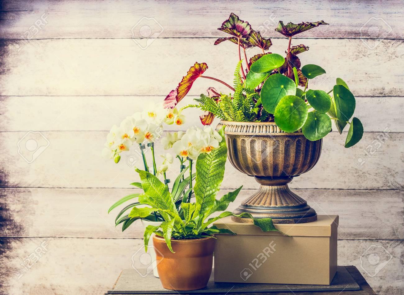 Bonitas Plantas Y Flores De Orquideas Para Jardineria Interior - Plantas-bonitas-de-interior