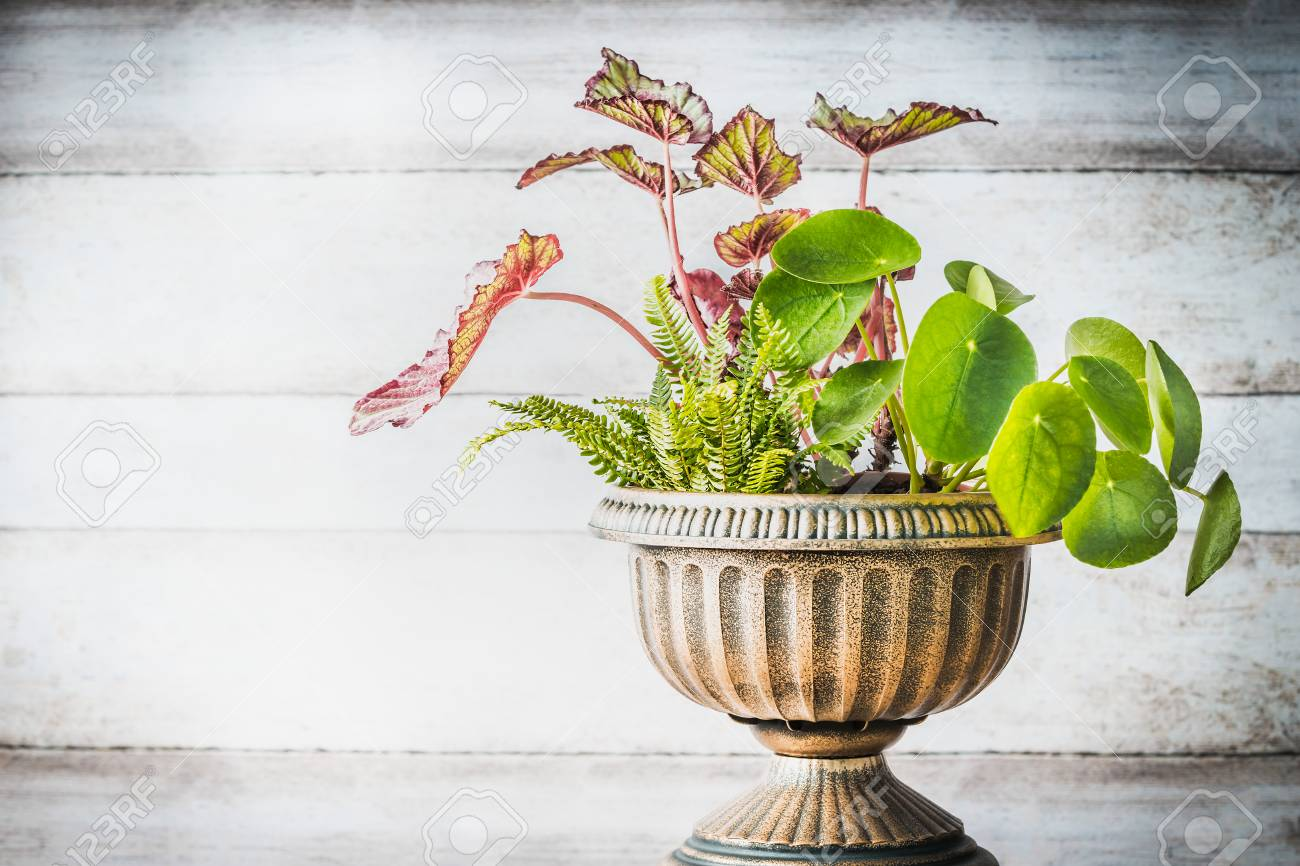 Beautiful Patio Urn Planter With Various Plants At White Wooden ...