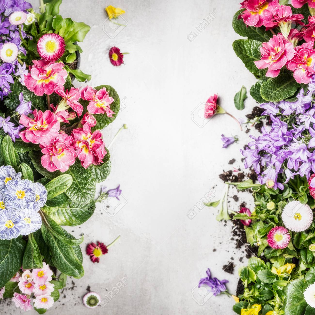 Various colorful garden flowers and plants ,top view, frame