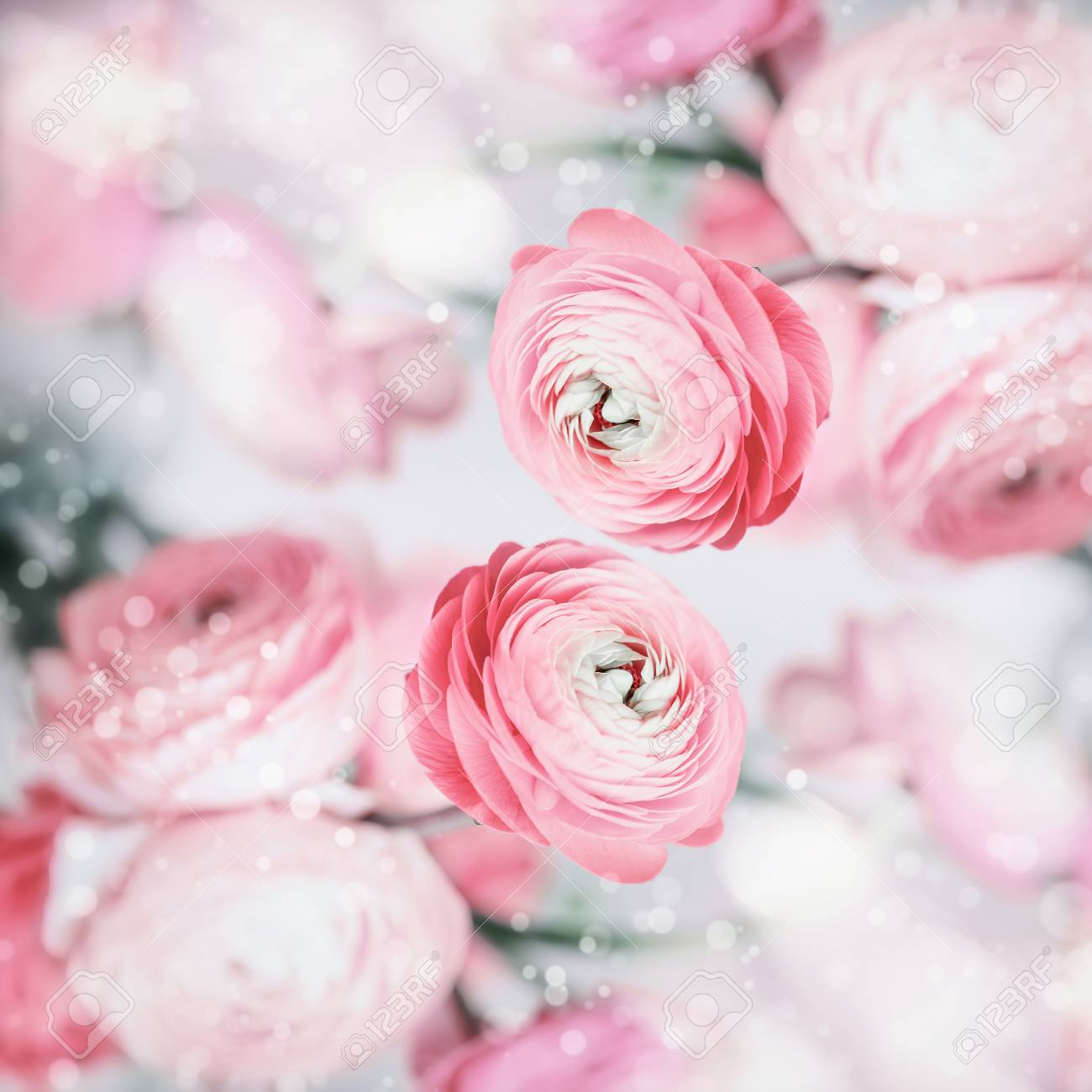 Lovely floral background with pretty pink pale flowers and bokeh lovely floral background with pretty pink pale flowers and bokeh pastel color stock photo mightylinksfo