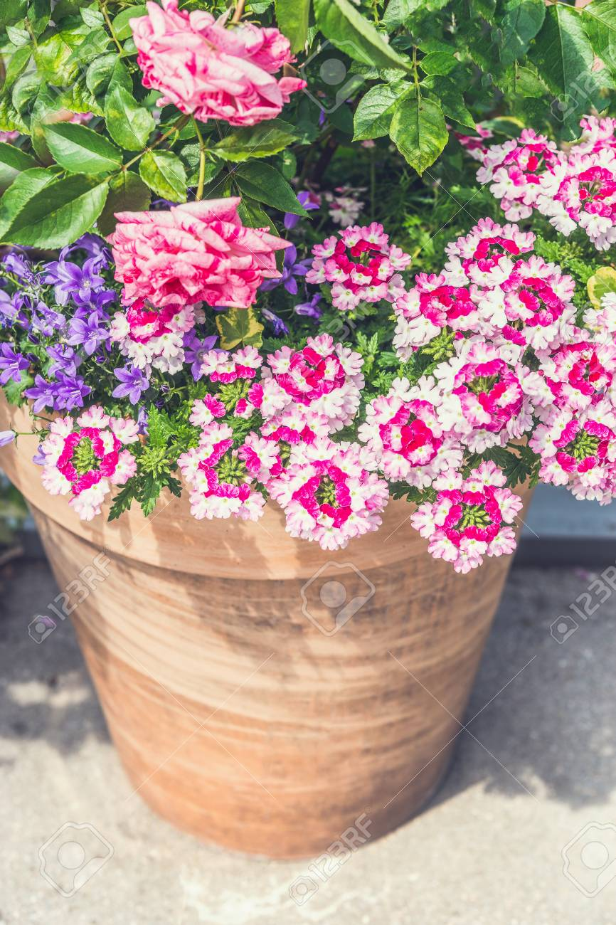Terracotta Container With Beautiful Pink Summer Flowers Roses