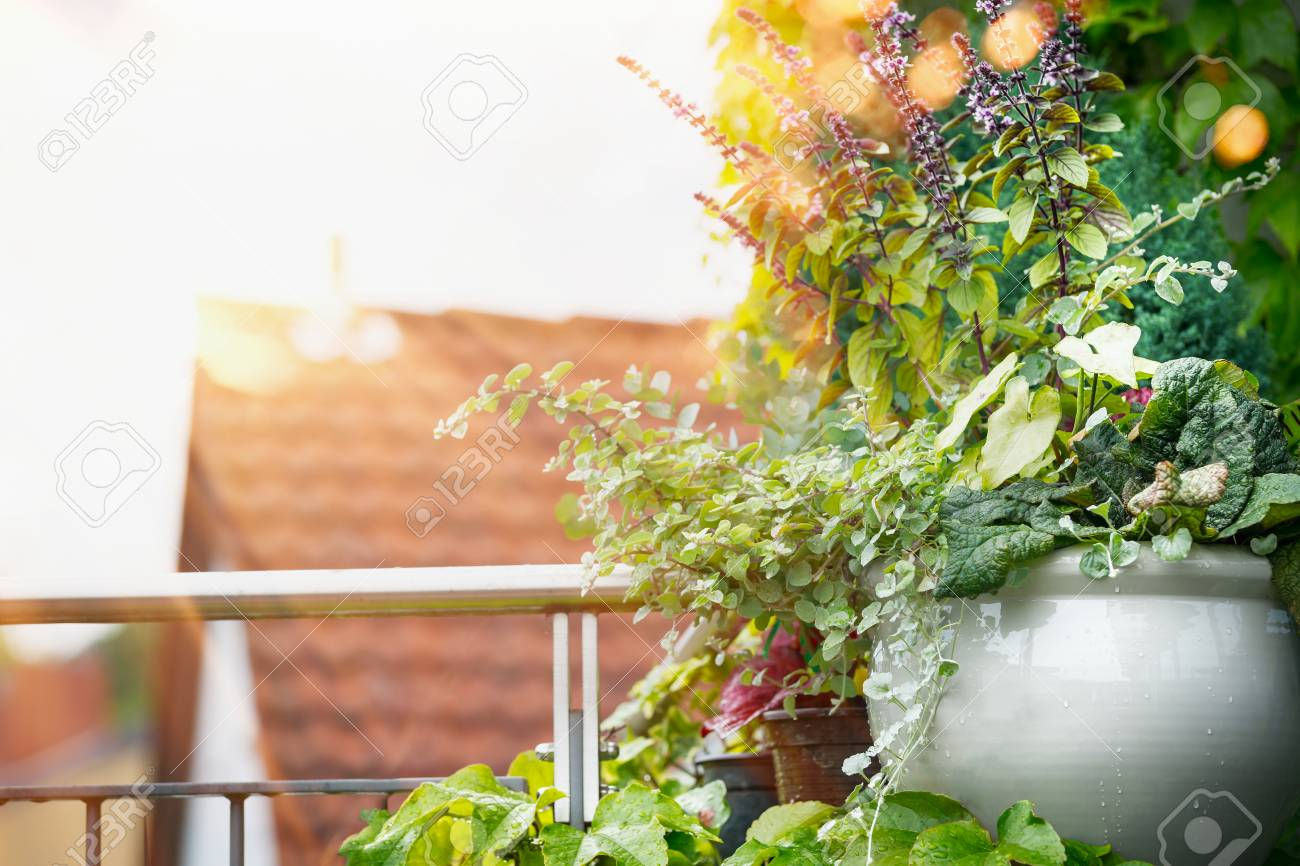 Flower Planter On Balcony Or Terrace In Sunset Light Urban Container Stock Photo Picture And Royalty Free Image Image 82115129