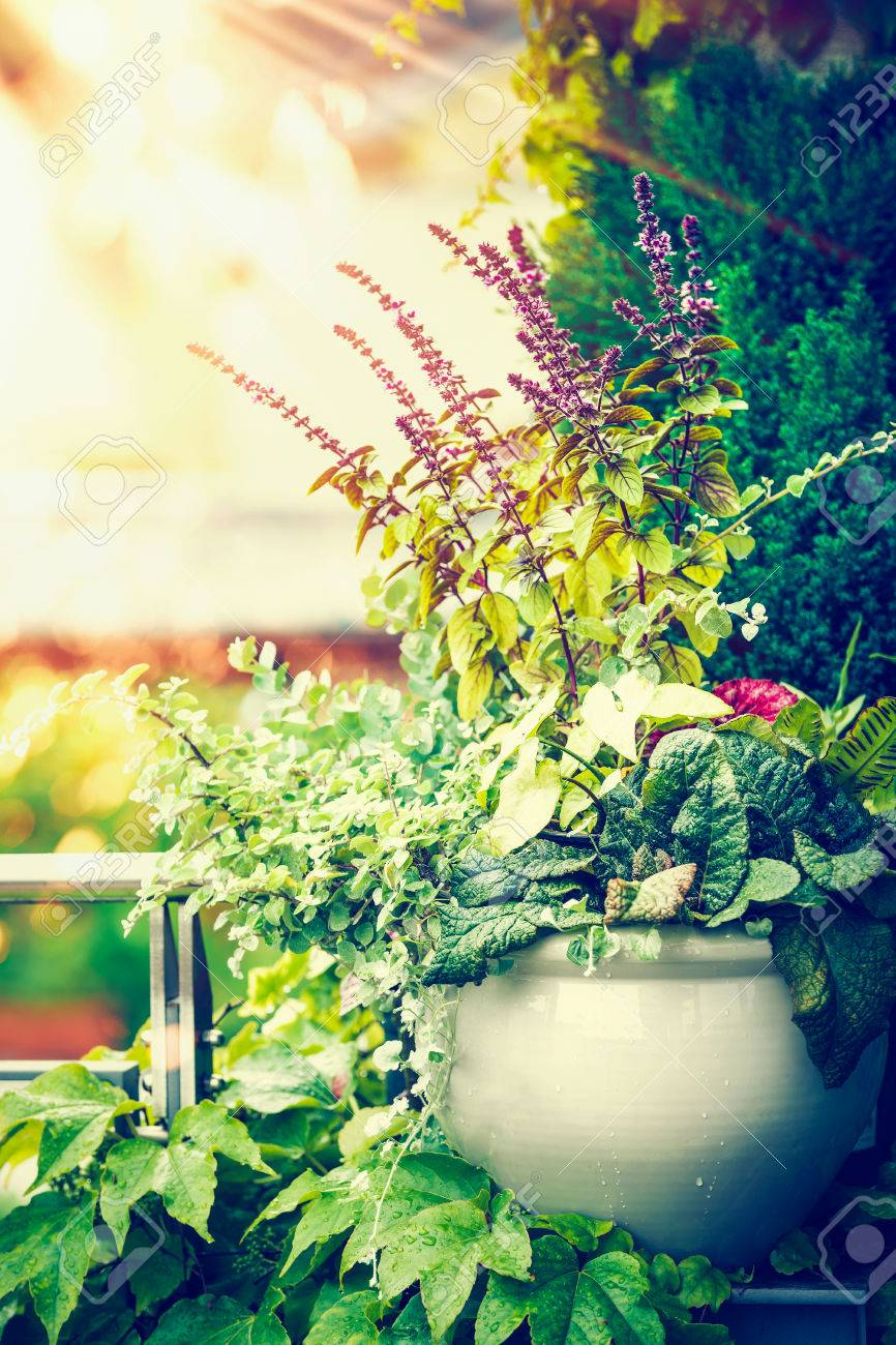 Hermoso Patio De Flores Olla En El Balcón O Terraza En La Luz Del Atardecer Jardinería De Contenedores Urbanos Ideas De Plantadores De Flores