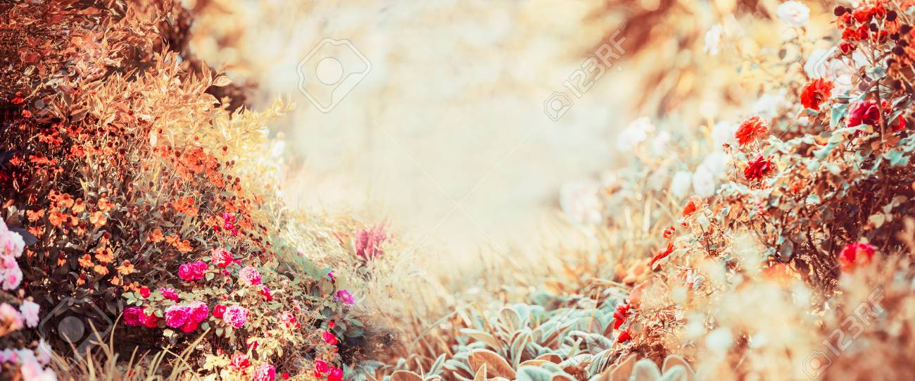 Pretty Autumn Background Of Sunny Day With Various Garden Or