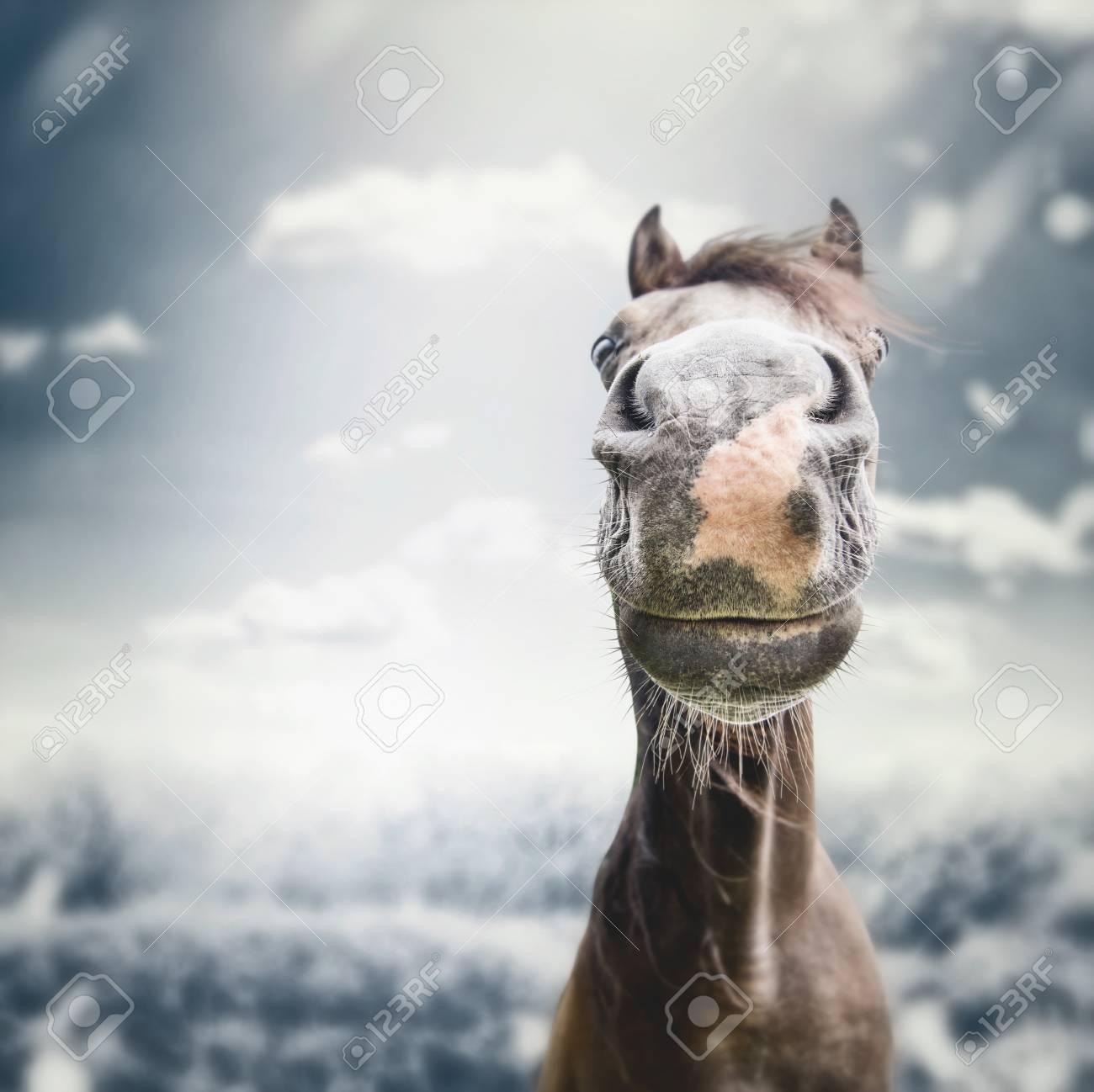 Muffa Divertente Del Fronte Del Cavallo Con Il Naso Alla Priorità