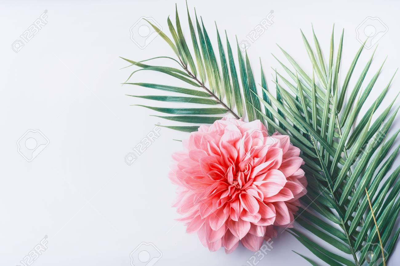 Pink Floral Desktop Background