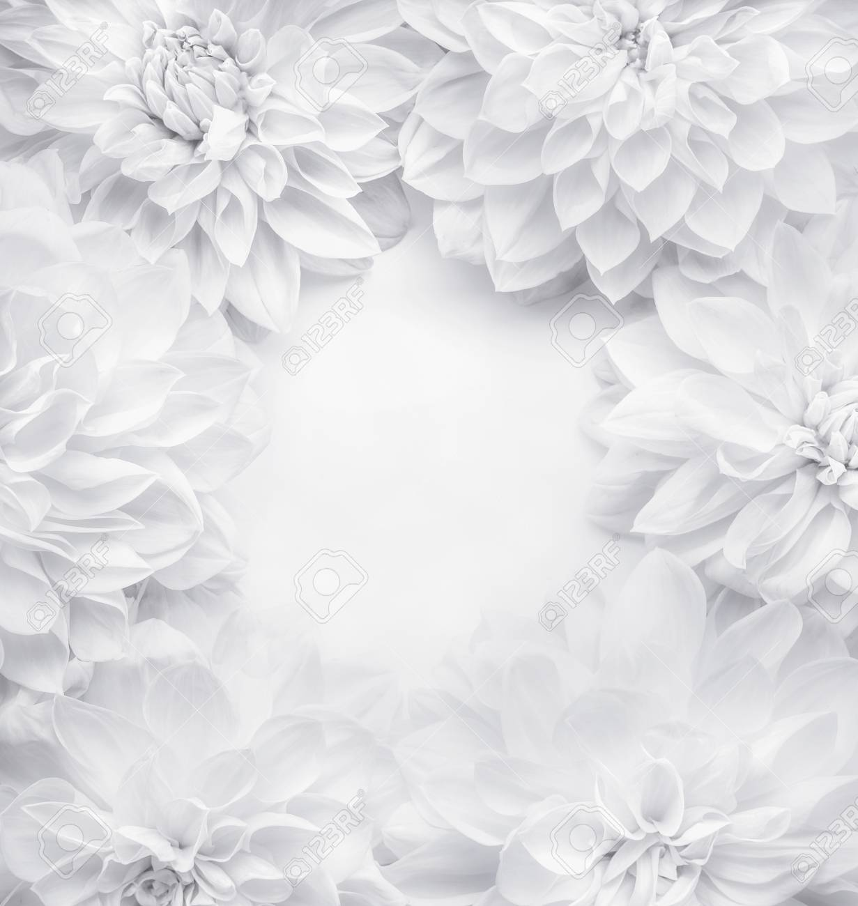 Creative White Flowers Frame Background Floral Pattern Or Layout