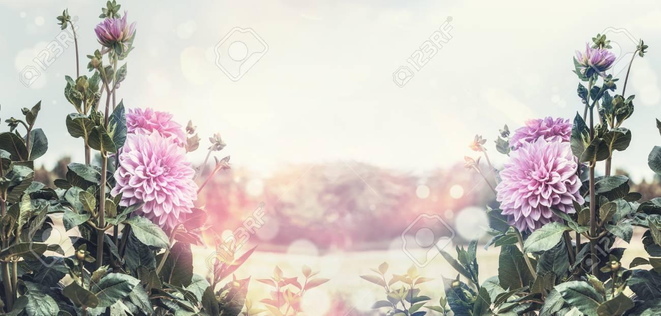 Summer garden flowers background with pink blooming, sun light..
