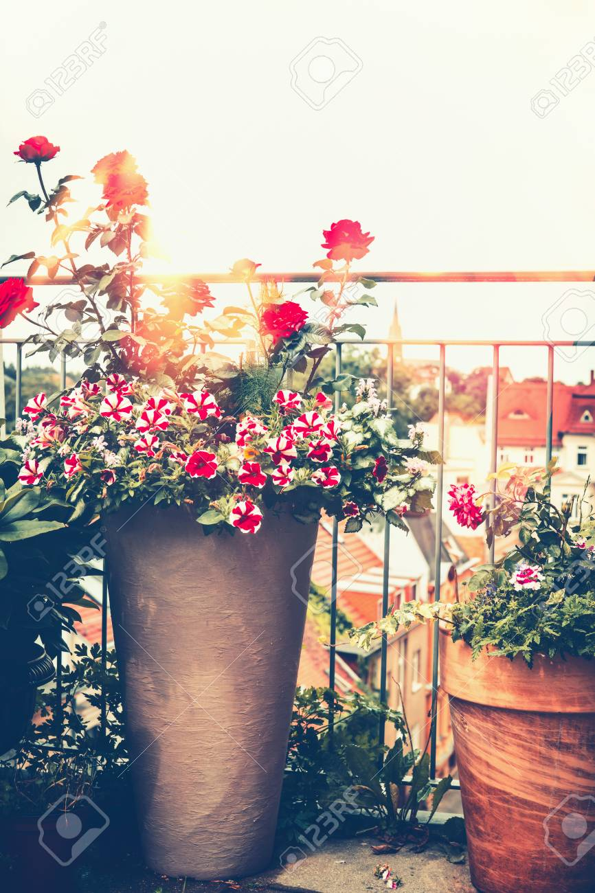 Autumn Balcony Garden Various Flowers Pots On Sunny Terrace Stock Photo Picture And Royalty Free Image Image 110956204