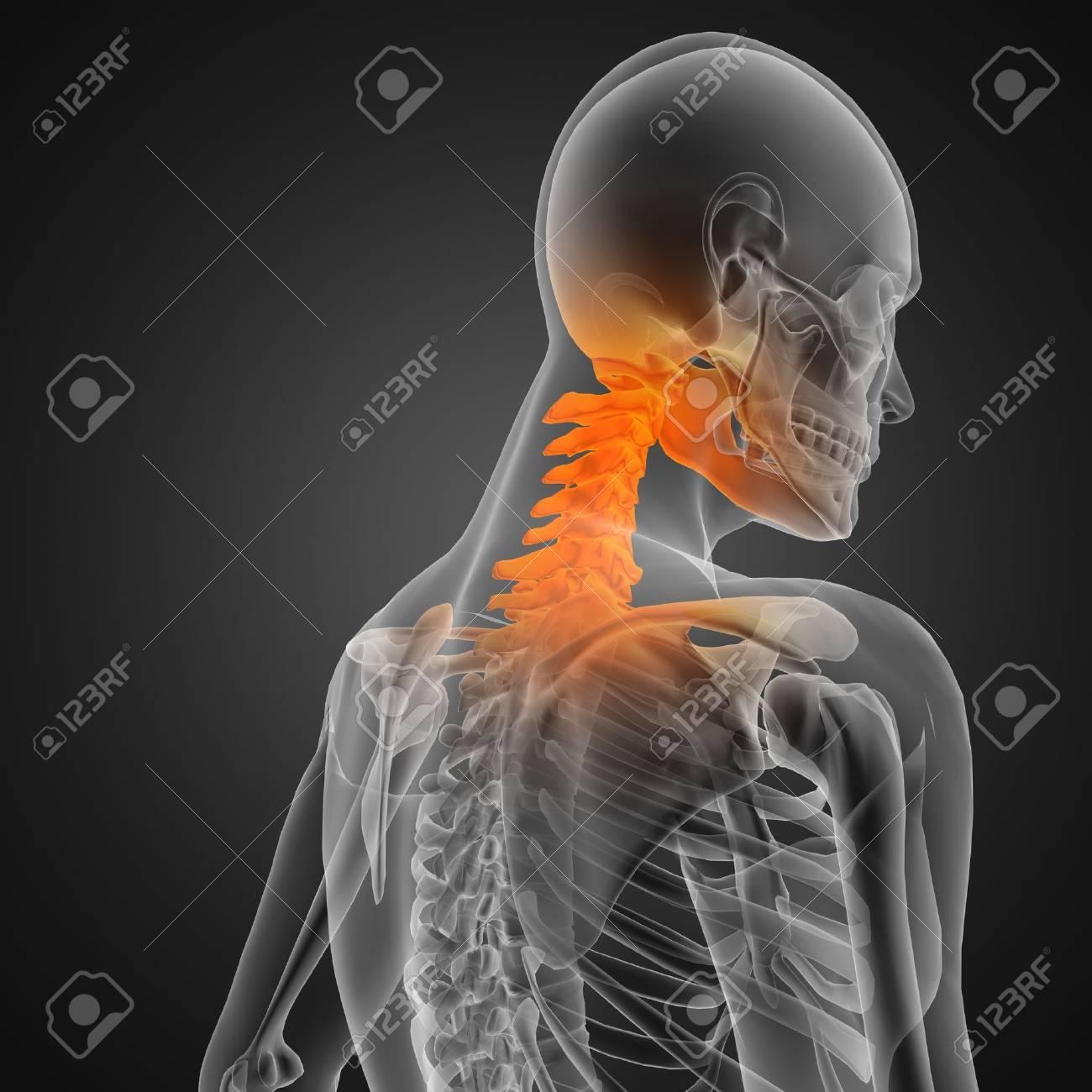 human radiography scan Stock Photo - 12265602