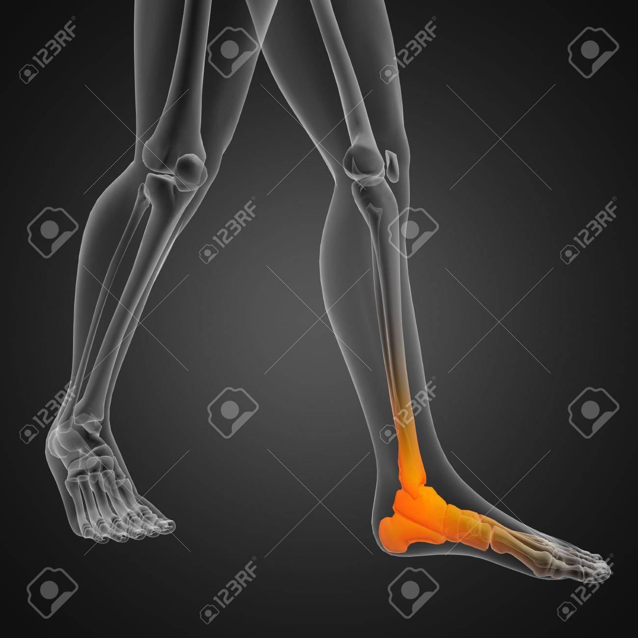 human radiography scan Stock Photo - 12265593