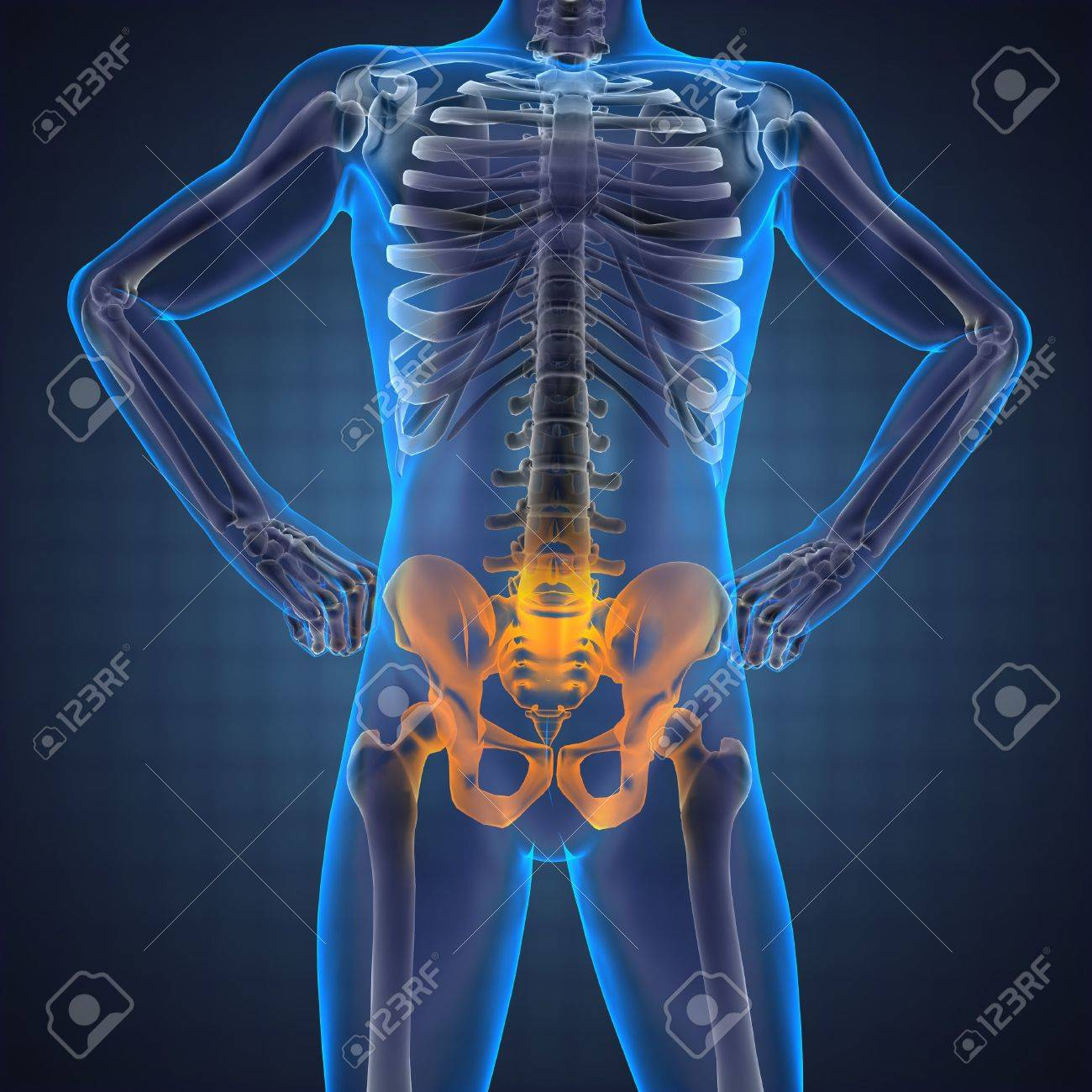 human radiography scan made in 3D Stock Photo - 12609882