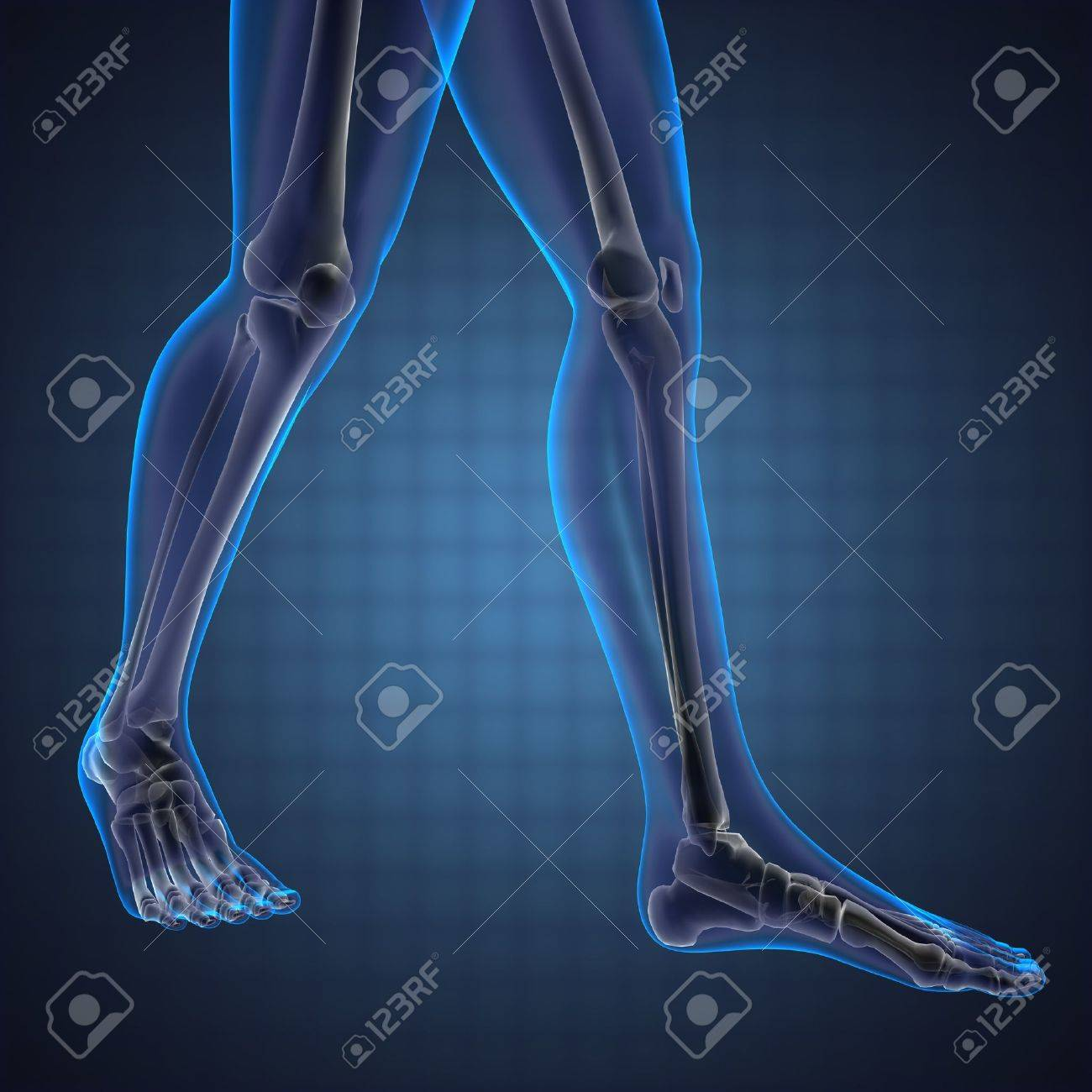 human radiography scan made in 3D Stock Photo - 13292201