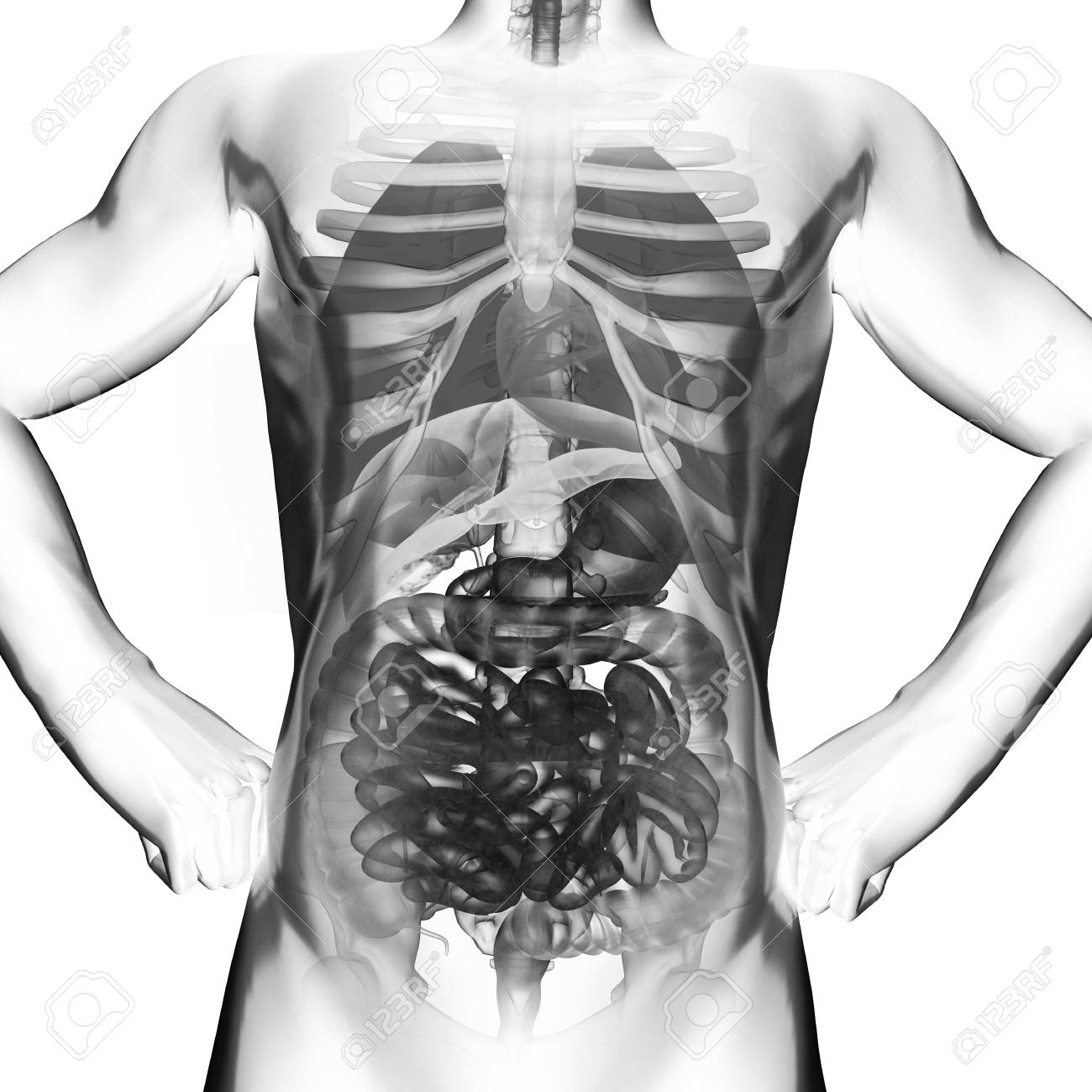 human entrails radiography scan on white Stock Photo - 18492390
