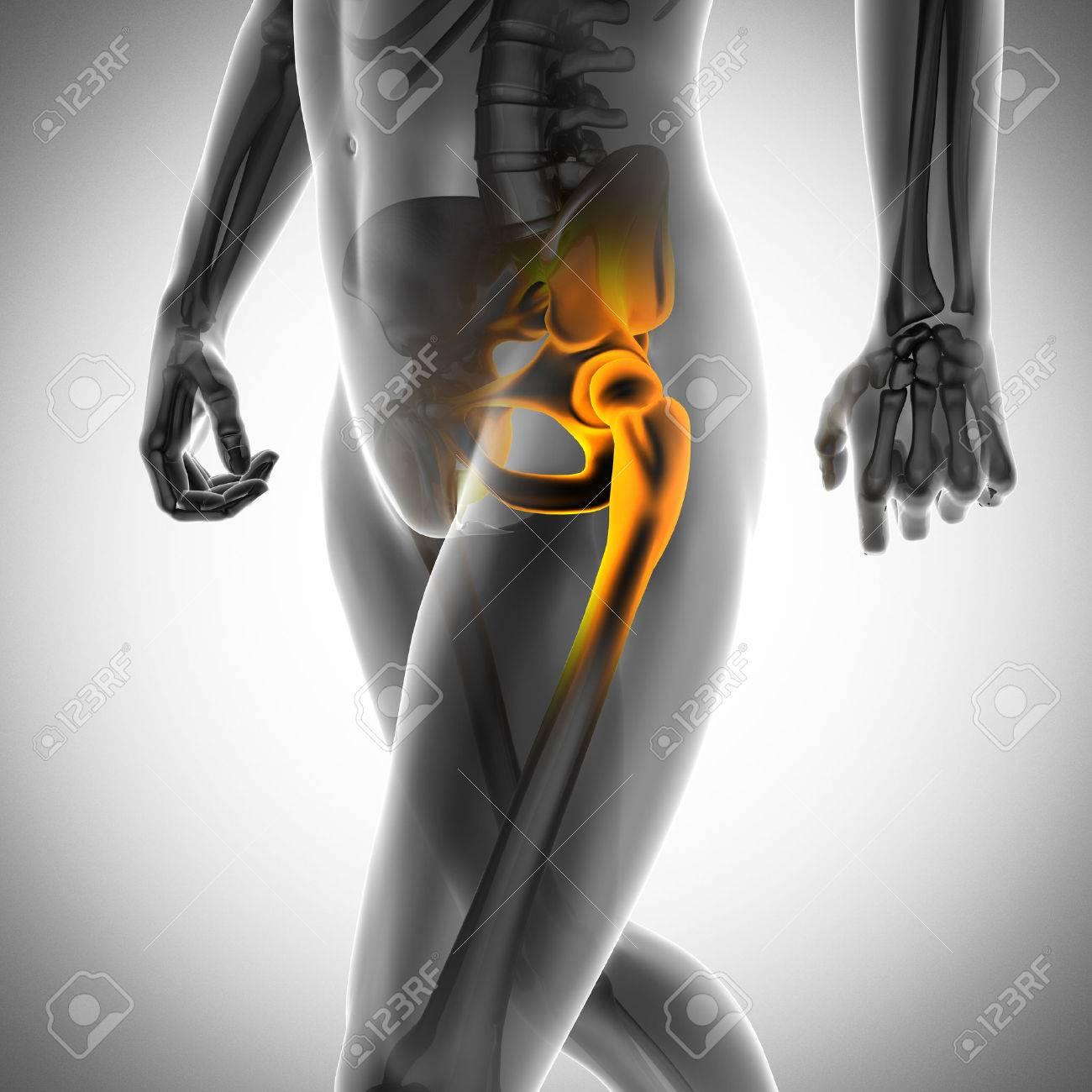 human bones radiography scan. x-ray image - 31178180