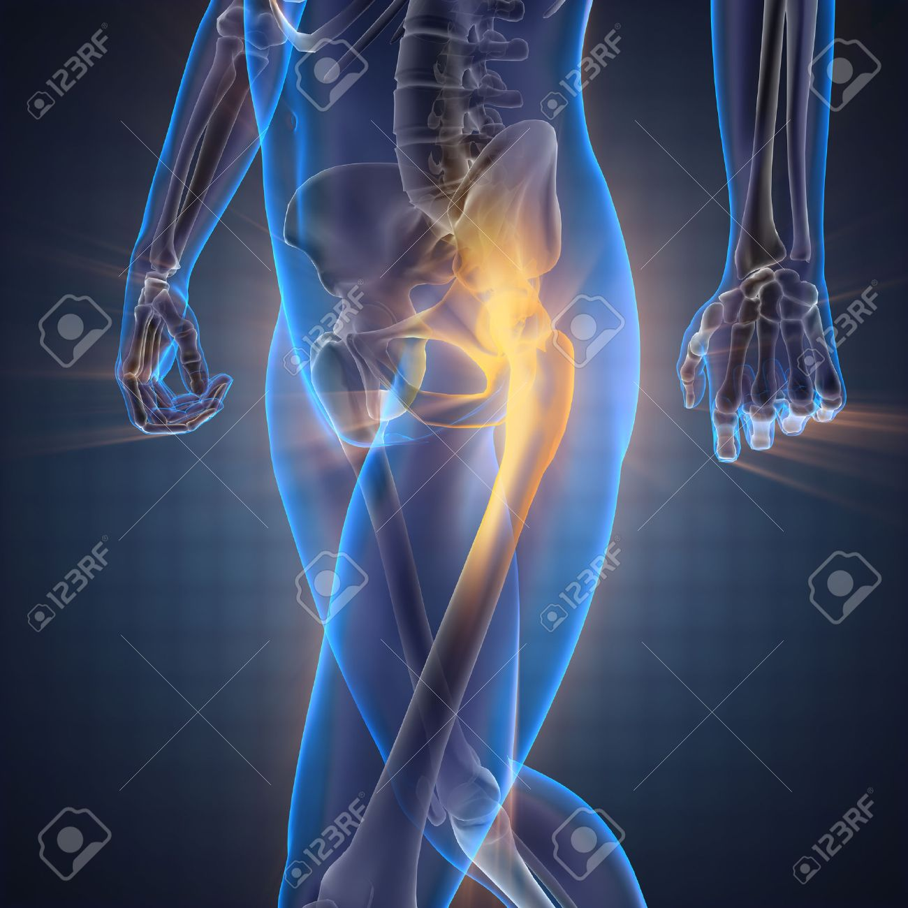 human bones radiography scan image - 47536331