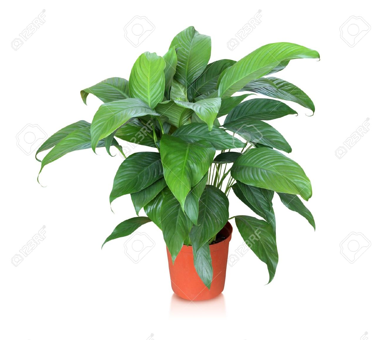 tropical house plant stock photos & pictures. royalty free
