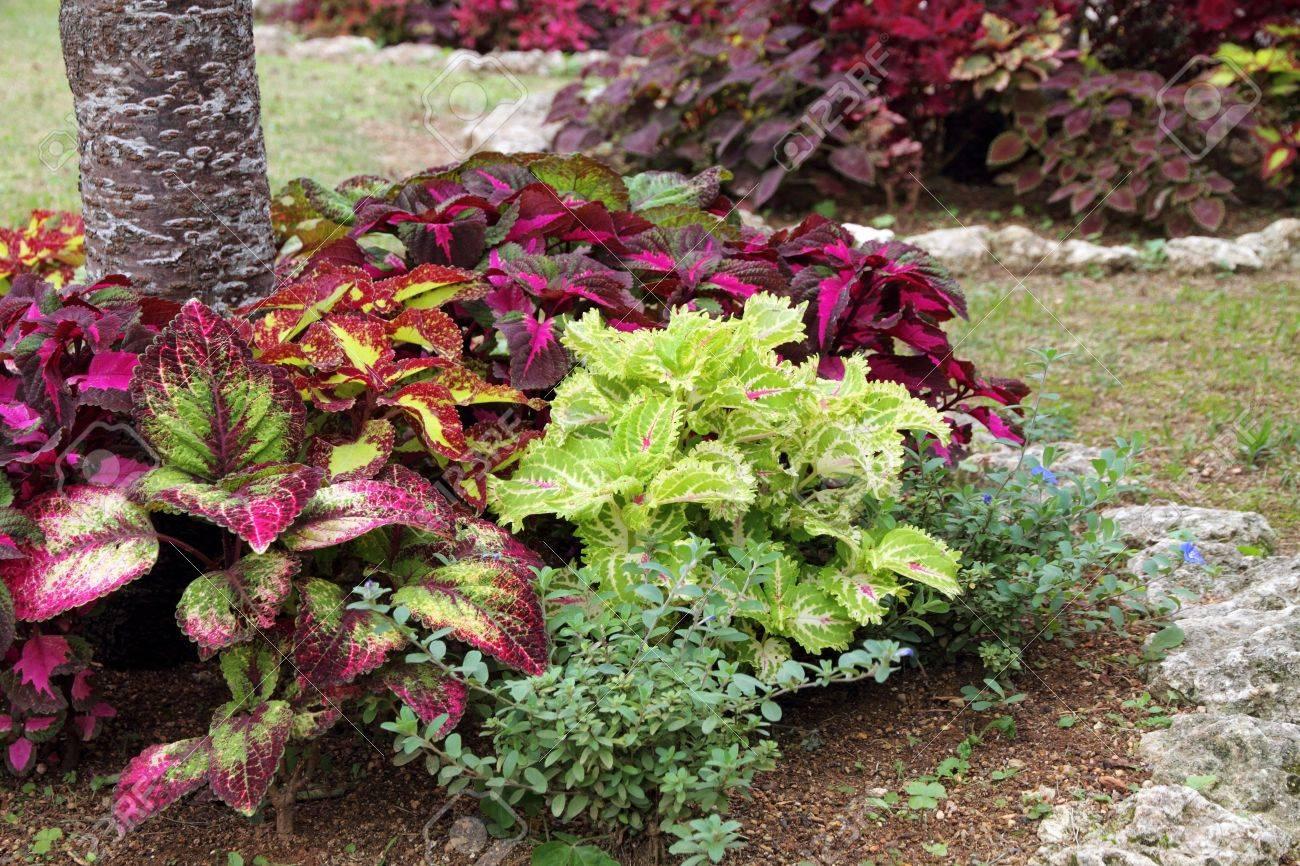 banque dimages jardin fleuri et paysag - Jardin Fleuri