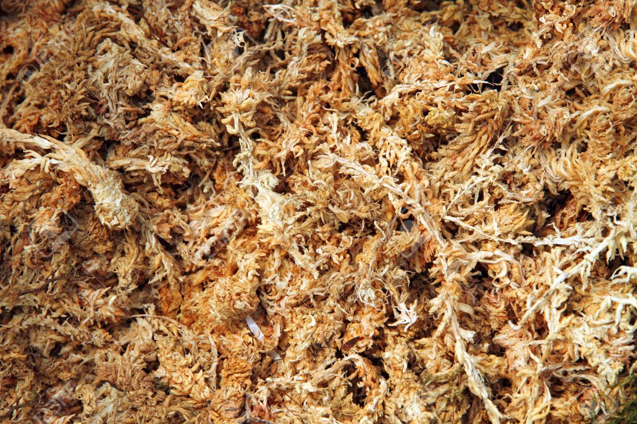 Dried Sphagnum Moss Stock Photo, Picture And Royalty Free Image ...
