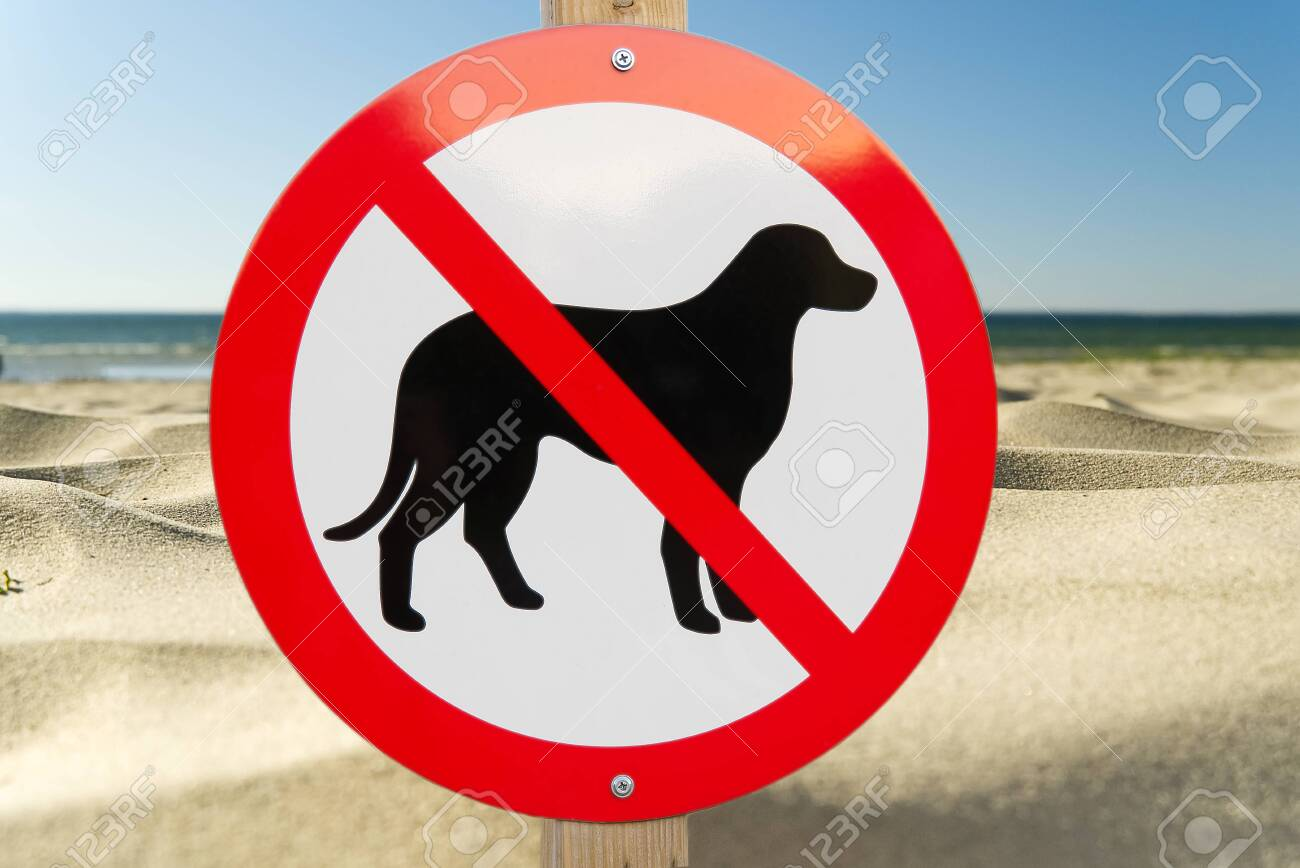 No dog sign on a sandy beach. no pets allowed sign to swimm asign summer beach. - 153303108