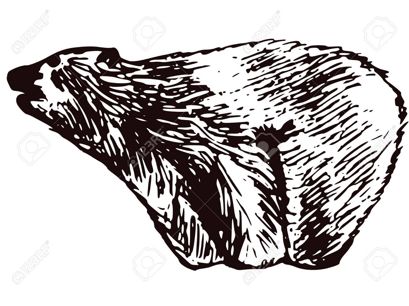 一連の動物、クマの手作りイラスト ロイヤリティフリークリップアート