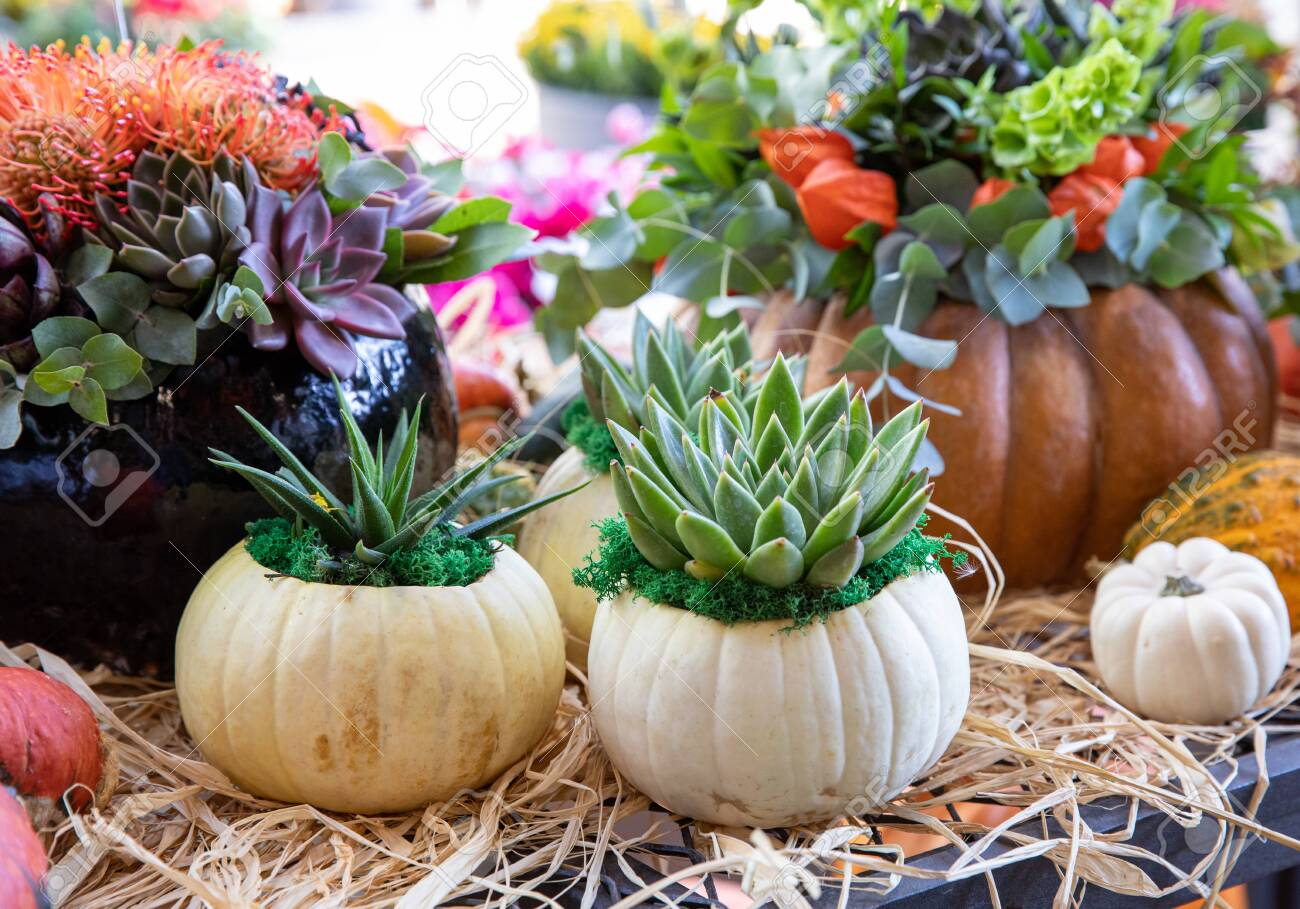Decorated Pumpkins With Succulents Flowers And Leaves At The