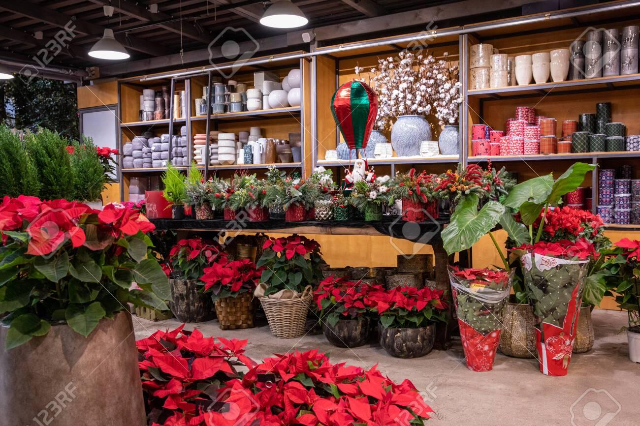 Beautiful Flowers Garden Shop Full Of Winter Seasonal Flowers